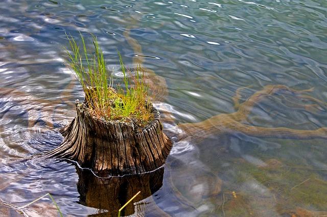 pařez ve vodě